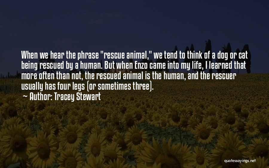 Tracey Stewart Quotes 1378048