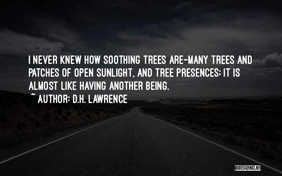 Tree And Quotes By D.H. Lawrence