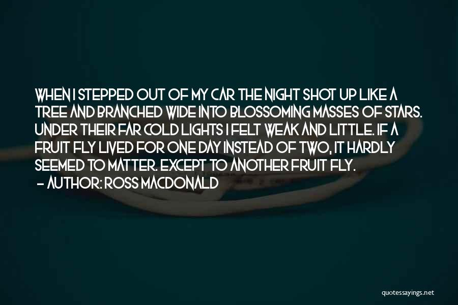 Tree With Lights Quotes By Ross Macdonald