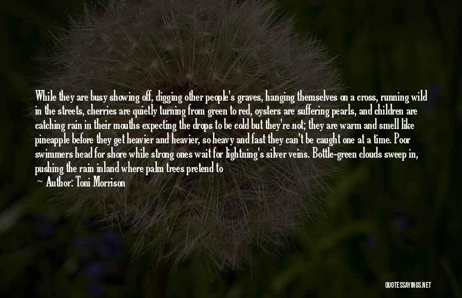Trees And Clouds Quotes By Toni Morrison