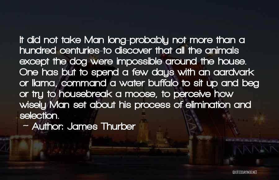 Water Buffalo Quotes By James Thurber