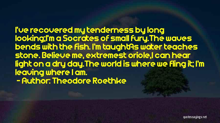 Water Stone Quotes By Theodore Roethke