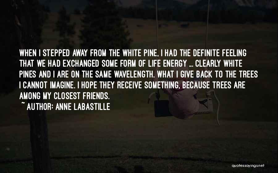 We Are Friends Because Quotes By Anne LaBastille