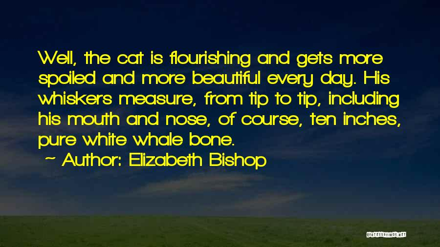 Whale Done Quotes By Elizabeth Bishop