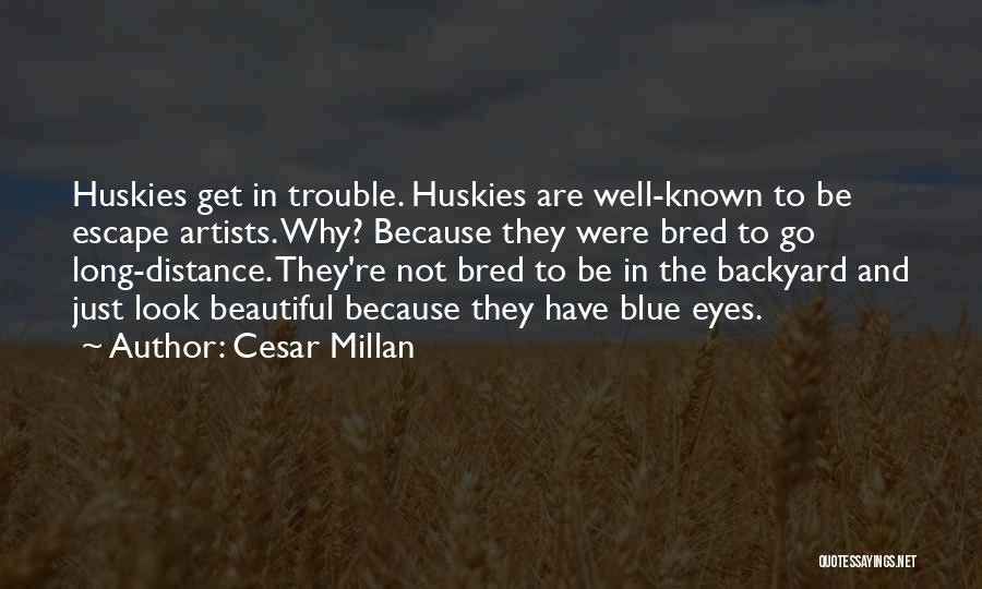 When I Look Into Your Blue Eyes Quotes By Cesar Millan