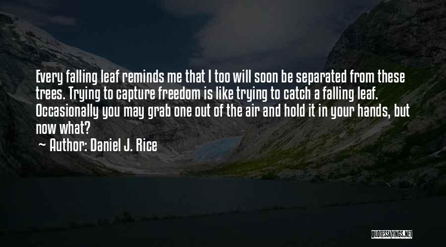 Wisdom And Trees Quotes By Daniel J. Rice