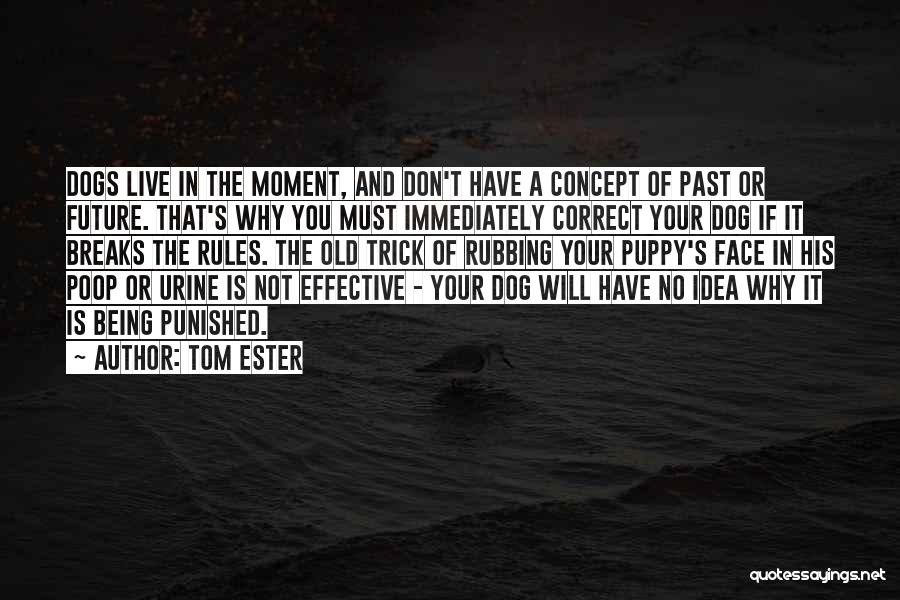 You And Your Puppy Quotes By Tom Ester