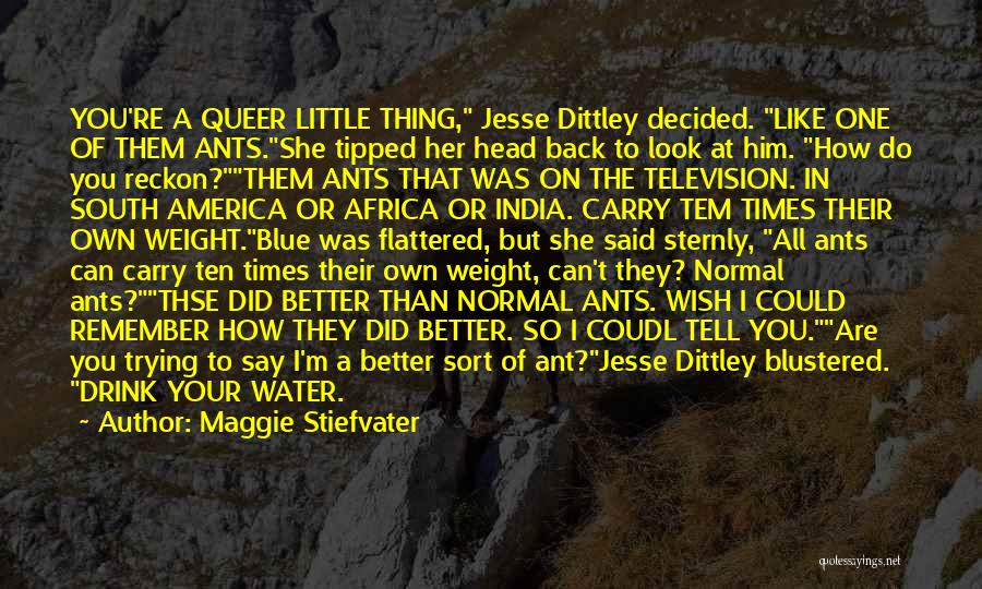 Your Better Than Him Quotes By Maggie Stiefvater