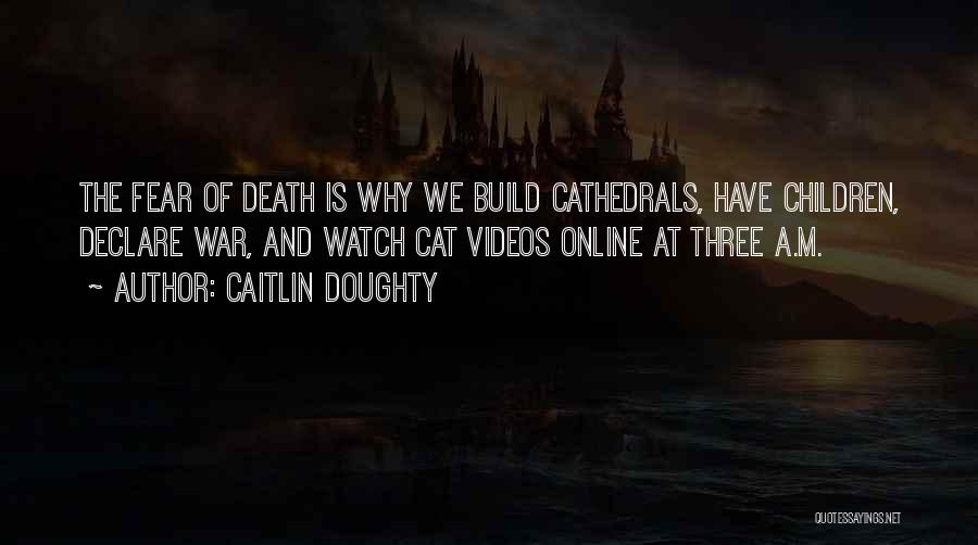 Your Cat Dying Quotes By Caitlin Doughty
